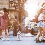 Reise med hund